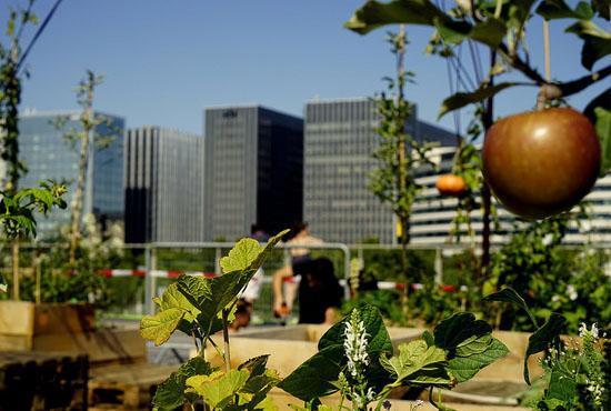 jardin-urbain-550-370
