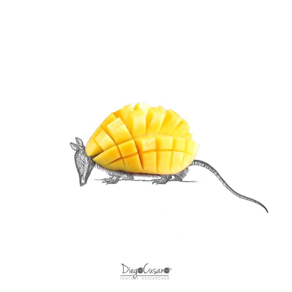 Septembre 2017 - Mango + Armadillo = Mangodillo
