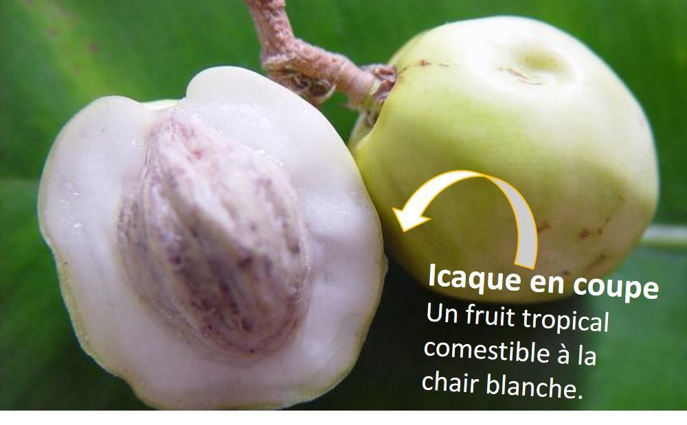 Fruit en i Icaque