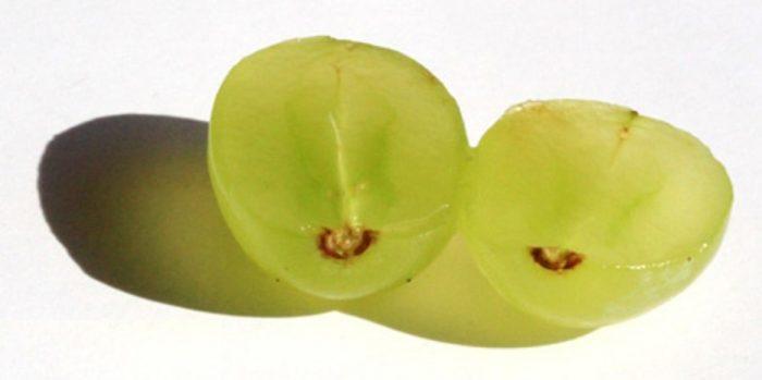 Raisins sans pépin : guide complet
