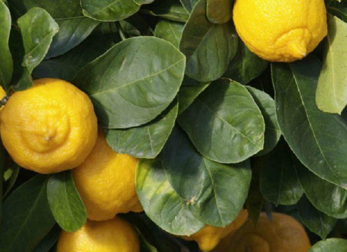 Fruits en L et légumes en L