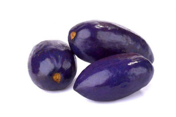 Safou (fruit) : le guide complet