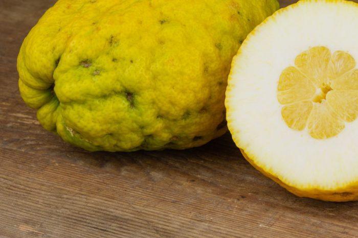 Cédrat (fruit) : guide complet