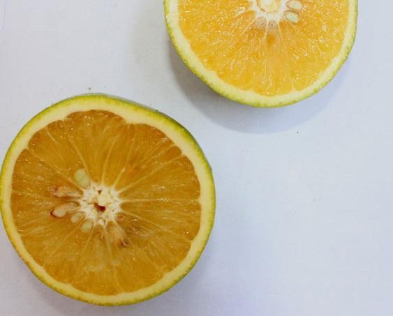 limette ou sweet lime coupée en deux