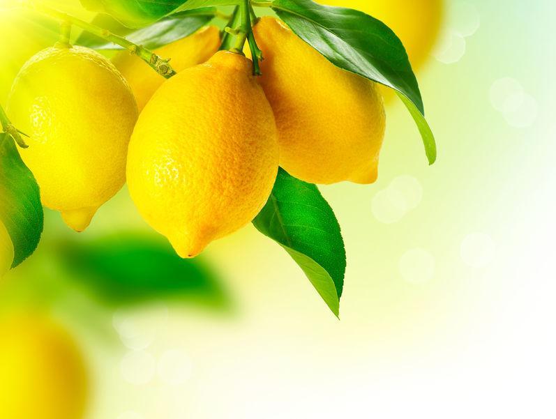 citrons jaune sur citronnier