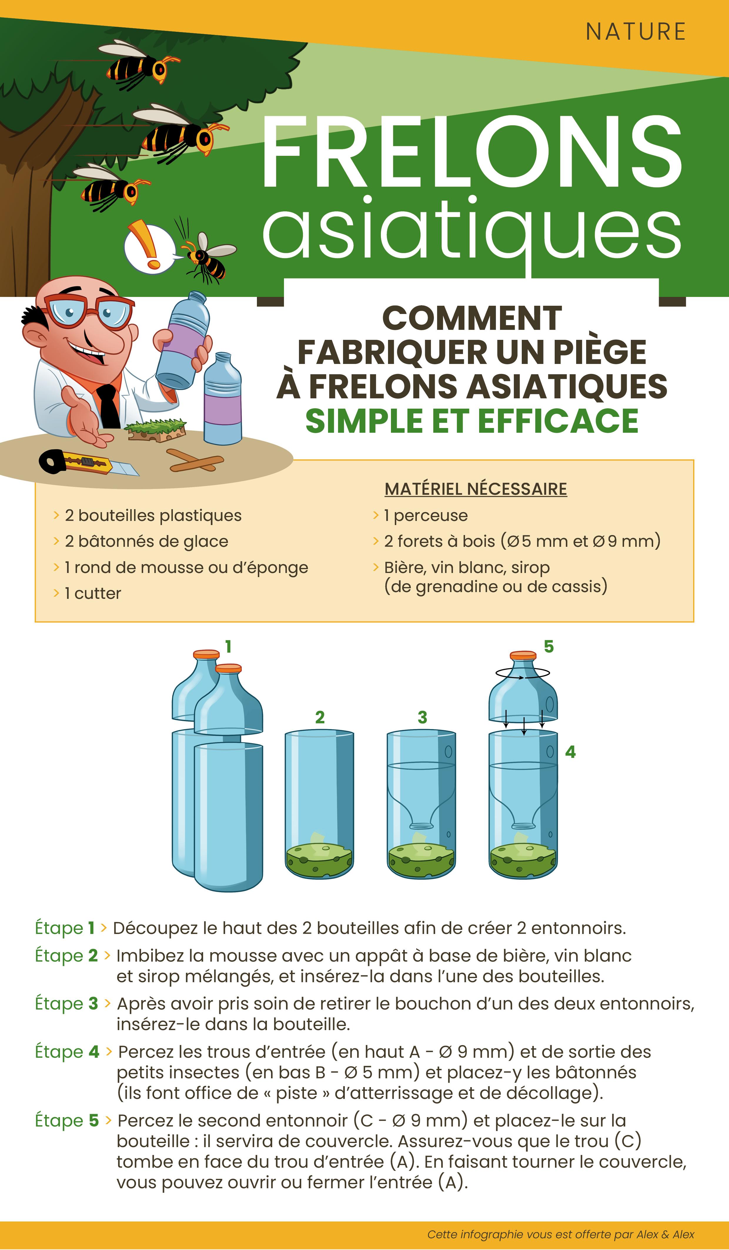 infographie frelonsV22