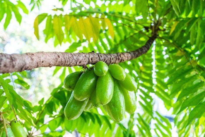 Bilimbi (fruit) : guide complet
