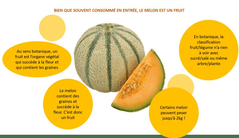 Melon : fruit ou légume ?