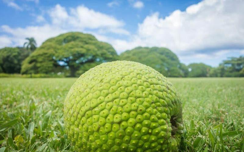 Savez-vous quel est le plus gros fruit au monde ?