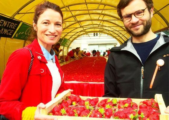 La fraise des bois en Dordogne