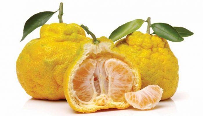 fruits en u et légumes en u