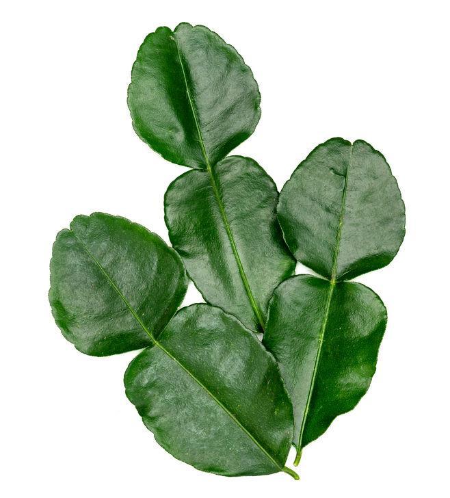 trois feuilles de combava