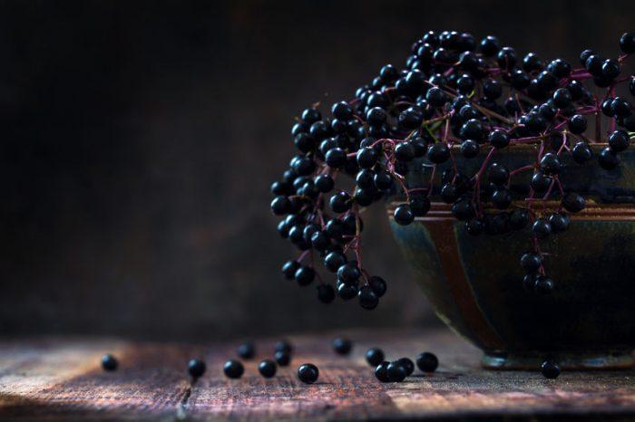 Sureau noir (arbre et fruit) : guide complet