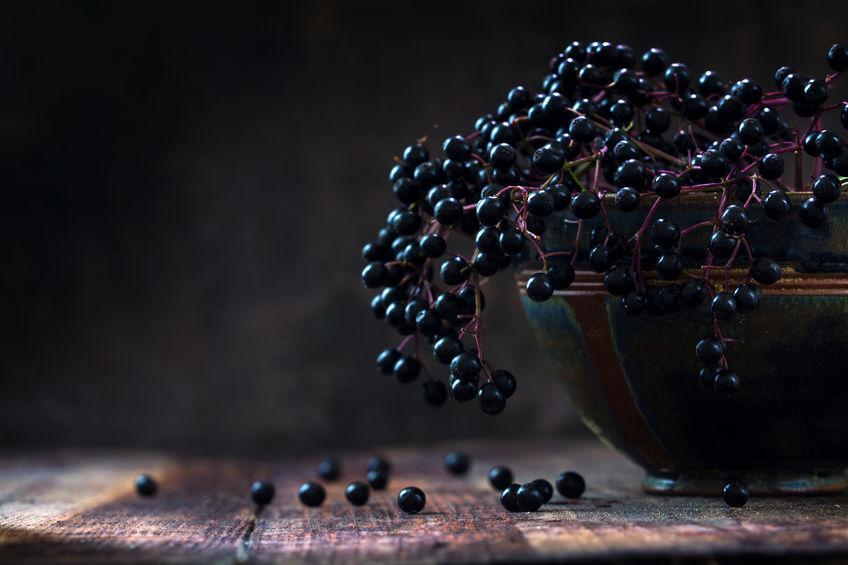 Sureau noir comestible