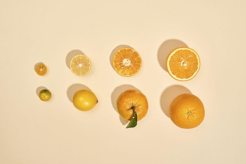 Kumquat : le plus petit des agrumes (taille comparée avec les autres agrumes)