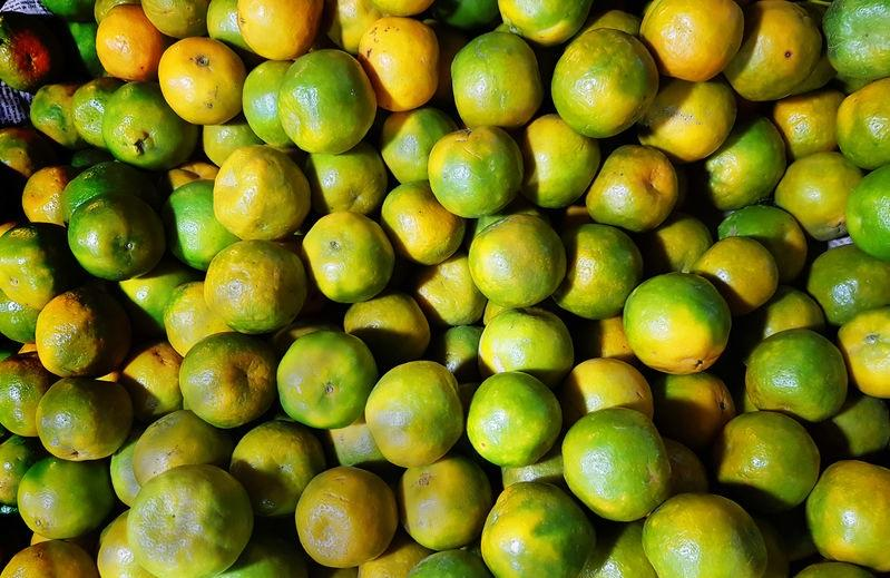heap of ripe green yellow sweet lemon mosambi lebu for sale in fruit market