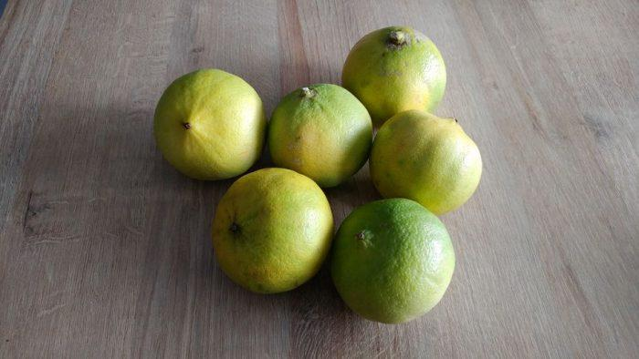 Bergamote (fruit) : guide complet