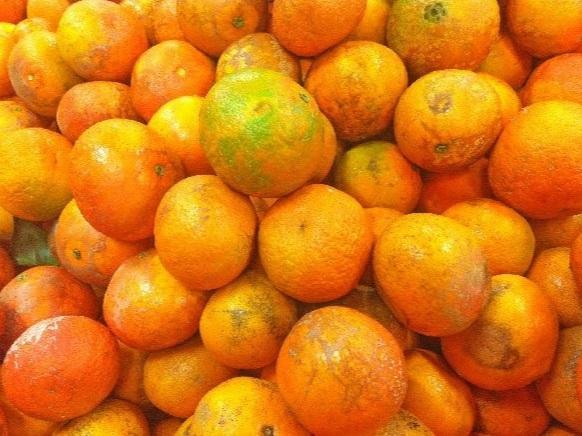etal de tangors murs et orange