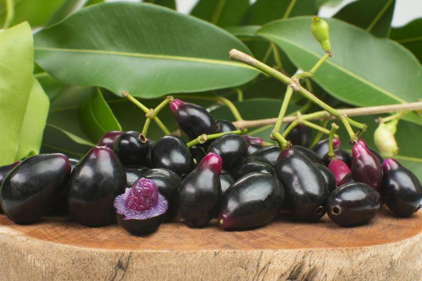 jamblon fruit exotique aux vertus médicinales