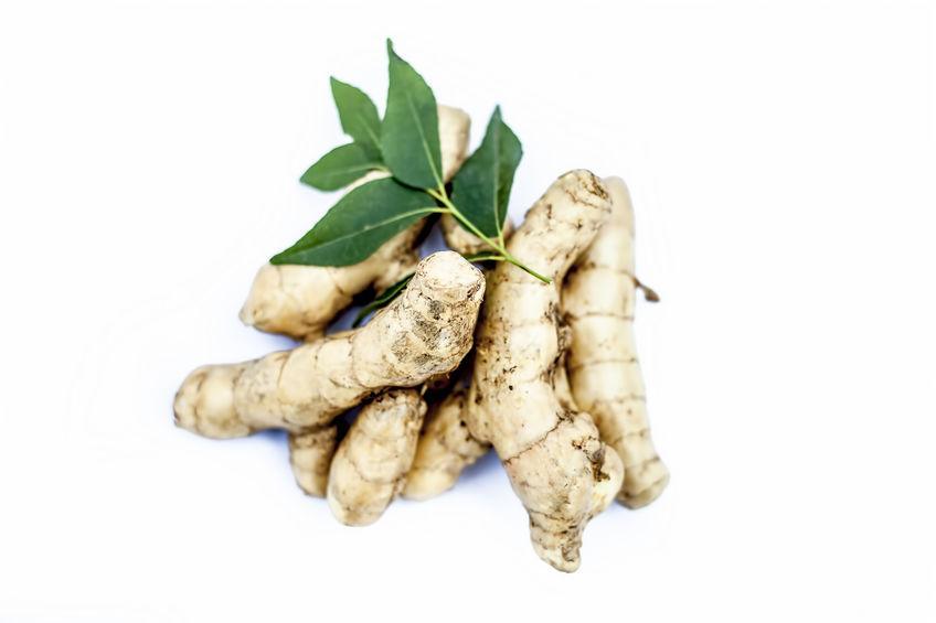 gingembre, racines et feuilles