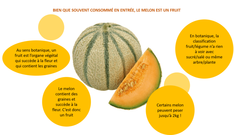 Melon : fruit ou légume ?