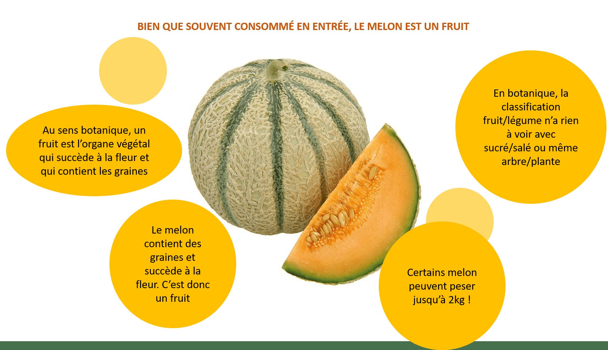 Melon fruit ou légume